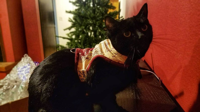 Harry Potter Pet Gifts - For Cats